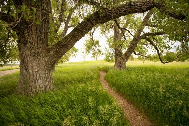 Pa Ingalls' cottonwood grove