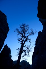Pre-dawn along the Needles Highway